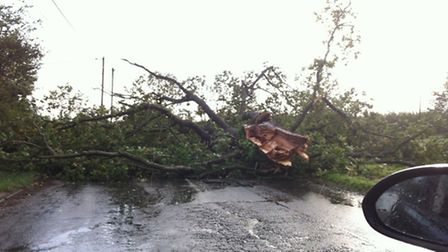 A large tree blocking the main road in Battisford