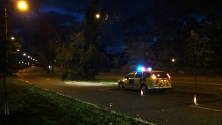 High winds in Suffolk have caused trees and branches to fall down. A police car diverts cars around
