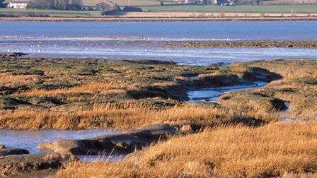 Saltmarsh and mudflats on the Stour Estuary at Copperas Bay, Essex