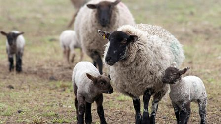 Scientists have raised fears about DEFRA cutbacks on animal health tests