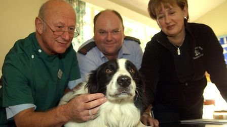 A dog is micro-chipped by a vet. Photo: James Linsell-Clark