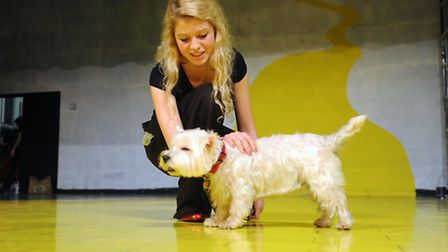 Dogs audition for the part of Toto in The Wizard of Oz at Ormiston Academy in Sudbury in the schools