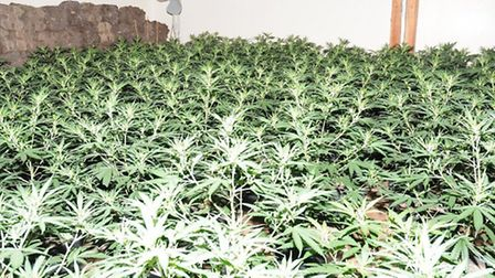More than 1,000 cannabis plants were discovered in two rooms at an industrial building in Rendlesham