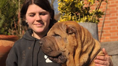 Emma White with Ted, an eight month old Shar Pei puppy, who needs a 'face lift' to correct the probl