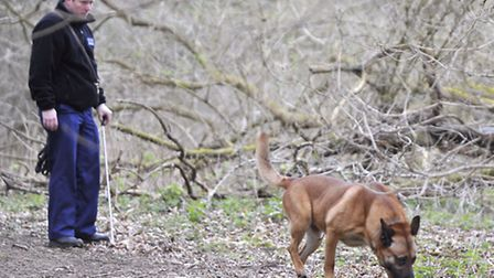Police dogs brought from the Met in London search the wooded area in Ufford.