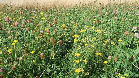 Plants providing sources of pollen and nectar for pollinators, courtesy of the Campaign for the Farm