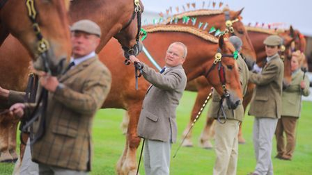 Suffolk Show - horses on show