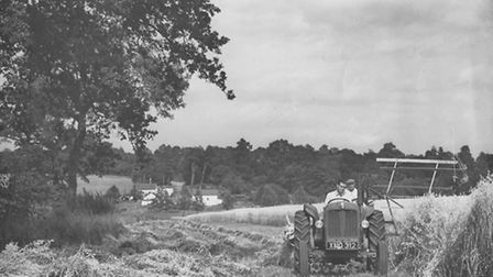 Peter Page on the tractor and Harold Bunton on binder, harvesting in Stisted circa 1950's at Covenbr