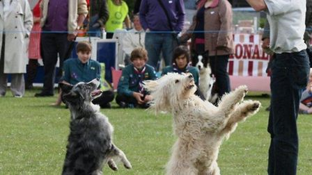 The K9 Dancing Dogs are coming to Halesworth Carnival