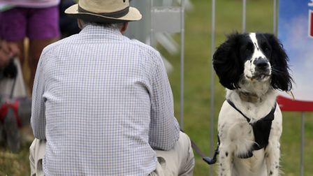Mans best friend had their day at the park during Suffolk Dog Day at Helmingham Hall on Sunday, 28