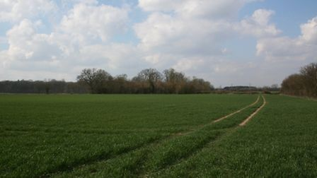 Farmland prices in East Anglia have continued to rise so far this year, says Strutt & Parker.