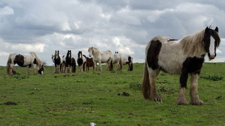 New laws are needed to tackle fly-grazing, according to a new report