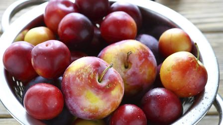 Cherry plums - but are these what Sheena Grant found in her garden?