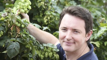 Adnams head brewer Fergus Fitzgerald examines an exuberant hop plant situated outside the brewery's