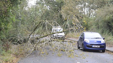 A tree fell blocking part of the B1077 road on Tuesday.