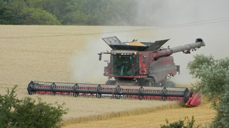 This year will be a record high for wheat yields in the UK, a survey predicts.