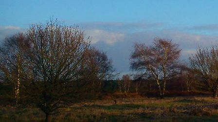 Rendlesham Forest. Photo by Alison Connors