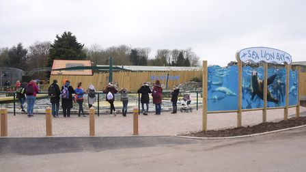 The 50th anniversary of Banham Zoo. The new Sea Lion Bay. Picture: DENISE BRADLEY