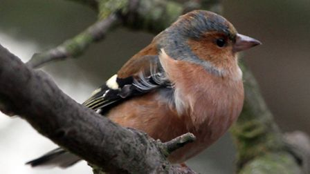 Wildlife spotted on the Magic Minsmere winter wildlife walk. Photograph Simon Parker