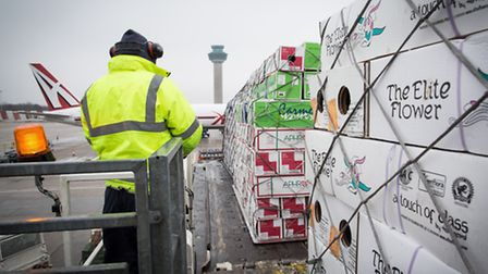 A cargo of flowers which arrived at Stansted from Colombia on a Martinair flight.