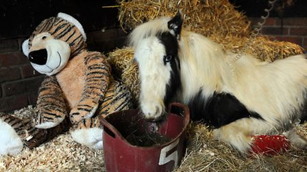 Gizmo the foal was abandoned by the roadside and is now making his recovery at Catley Cross Veterina