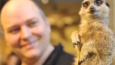 The Animal Experience's Mitchell Price holds one of his Meerkats at Colchester's Natural History Mus