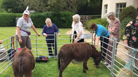 Oaklands care home residents greet donkeys as they arrive. Picture: Kingsley Healthcare
