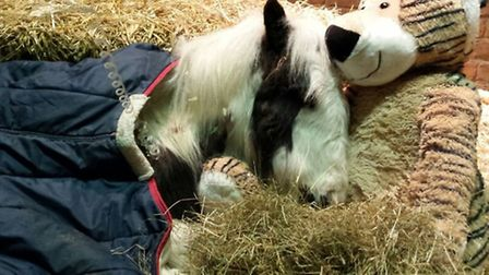 Gizmo the foal