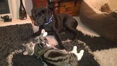 Buster the 5-month-old labrador who died in a house fire in Prigg Walk, Bury St Edmunds, with Tinker
