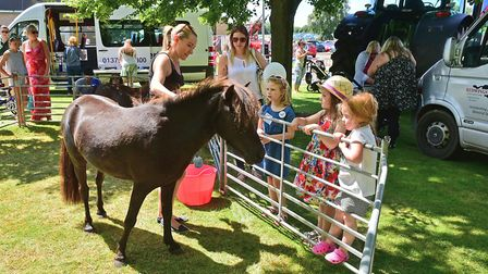 South Norfolk Show. Ponies from Redwings Horse Sanctuary last year. Picture: ANTONY KELLY