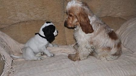 Penny and Barley last December!