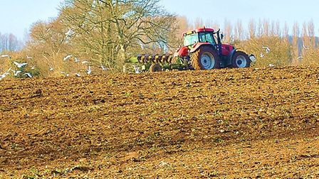 A tractor ploughing a Suffolk field.