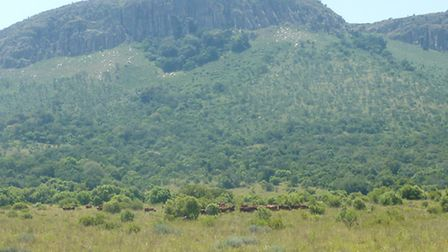 Euston and Kirton herds in South Africa. The Oostermoed herd in Gauteng has been developed by farmer