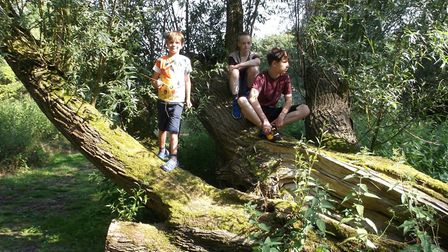 Youngsters enjoying the Scole Nature Trail. Picture: Scole Nature Trail Trust