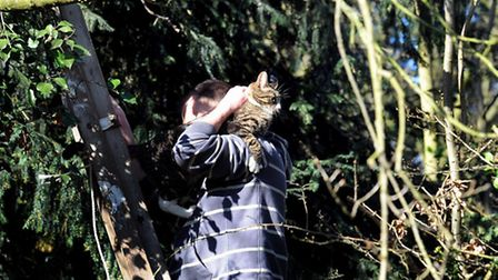 The fire service is called to rescue a cat in Home Farm Lane, Bury, but it comes down by itself.