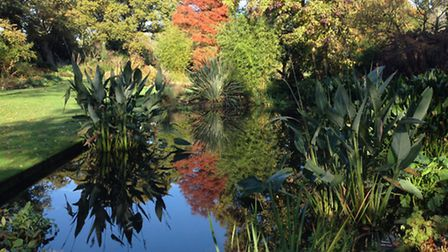 The Beth Chatto Gardens near Colchester are stunning in autumn.