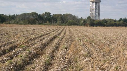 The 30-acre Walton Green North field has been earmarked for housing by Suffolk Coastal - but Felixst