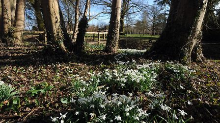 Snowdrops at Kentwell Hall in Long Melford. Elaine Edmead (left) and Nichola Edmead with Gracie Mai