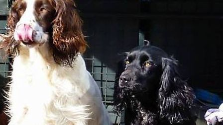 Cocker spaniel, Ruby, and springer spaniel, Skye, were taken from a kennel in Holton St Mary