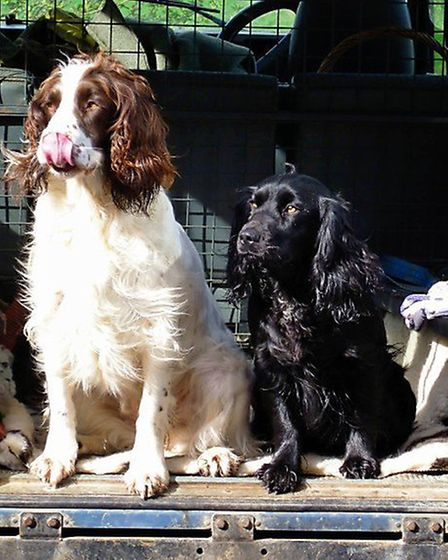 Skye and Ruby, dogs stolen from Holton St Mary