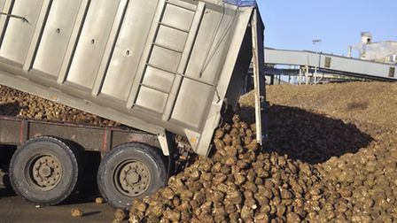 A delivery of sugar beet arriving at the British Sugar factory in Bury St Edmunds.