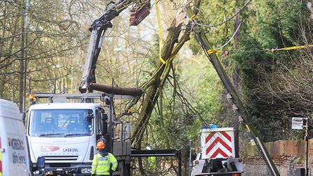 A large tree has smashed into electricity cables after heavy winds in Great Barton.
