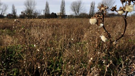 Planners have refused homes on vacant land at Felixstowe's Haven Exchange site.