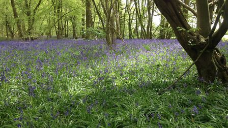 Ancient woodland, timeless and pretty