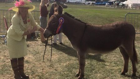 Overall Champion donkey at the Suffolk Show was Romanhill Dillydaydream, who is owned by Mrs Sarah N
