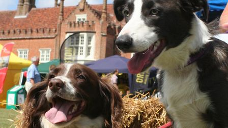 It's Suffolk Dog Day 2015 this weekend
