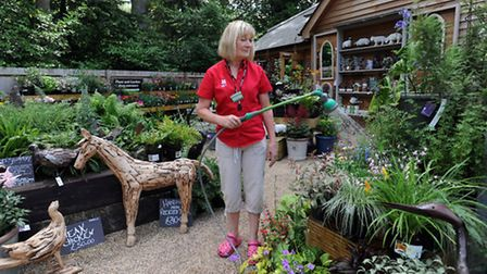 People enjoy the sunny weather at Ickworth Park in Horringer. Linda Munday watering the plants.