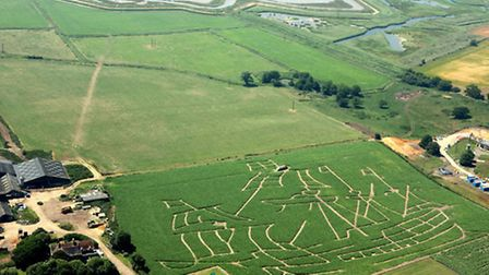 Southwold maize maze - the maze takes on a different theme every year