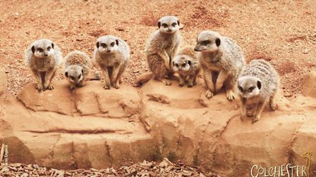 30 great days out in Essex - Colchester Zoo