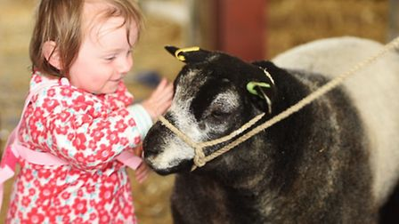 Suffolk show day 2 Cute kids Amelia Bright with yoghurt the blue Textel